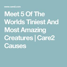 Meet 5 Of The Worlds Tiniest And Most Amazing Creatures | Care2 Causes