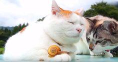 Ce chat adore son ami l'escargot!  http://rienquedugratuit.ca/videos/ce-chat-adore-son-ami-lescargot/