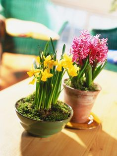 Bring spring to your doorstep: HGTV Gardens provides easy steps for planting bulbs in containers.