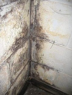 185 best black toxic mold images cleaning mold toxic mold rh pinterest com how to clean mold off a basement floor how do you clean mold in a basement