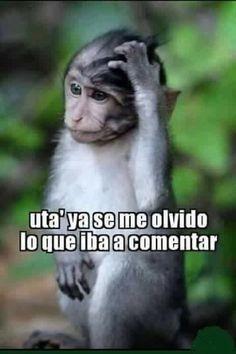 Did I hear it? Funny Spanish Jokes, Mexican Funny Memes, Mexican Humor, Spanish Humor, Spanish Quotes, Funny Jokes, Funny Emoji, Funny Signs, Funny Images