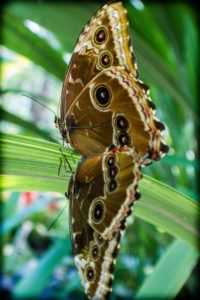 papiliorama Moth, Canon, Insects, Animals, Butterfly Species, Animales, Cannon, Animaux, Animal Memes