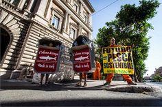 Spigolature  di Dino: Omaggio a  Greenpeace 2015, un anno di lotte