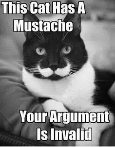 Mustache Cat. Move over colonel meow and grumpy cat!!