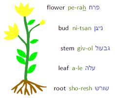 Google Image Result for http://www.hebrewpodcasts.com/resources/flower.png