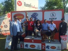 ALIANZ TURKEY AVKIF BURSA CAC 08.05.2016   AVRASYA KÖPEK IRKLARI FEDERASYONU - ALIANZ TURKEY