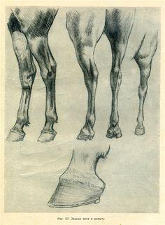 Как рисовать лошадь...