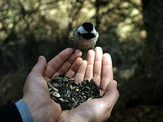 I love chickadees. #Heart #Chickadee