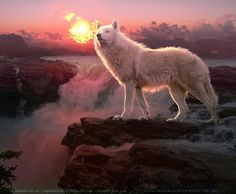 Wolf Images, Animals, Sun, Wolves, Woods, Animales, Wolf Pictures, Animaux, Animal