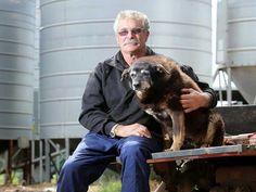 Dünyanın en yaşlı köpeği olan Maggie, 30 yaşında hayata gözlerini yumdu. Haberin devamı ajanimo.com'da... #ajanimo #ajanbrian #köpek #dog #hayvan #animal