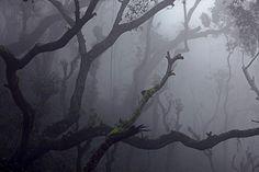Chandradrona's Fog - India
