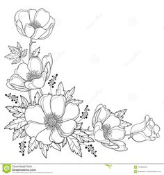 Flower Drawing Discover Hand drawing corner bouquet with outline Anemone flower or Windflower bud and leaf in black isolated on white background. Ornate contour Anemone for spring or summer design or coloring book. Cute Flower Drawing, Floral Drawing, Art Floral, Outline Drawings, Art Drawings, Corner Drawing, Anemone Flower, Anemone Bouquet, Watercolor Paintings