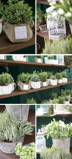 Love these giveaways - baby plants...  Fits in with LU's colour scheme, too!