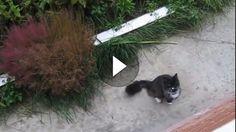 Wenn man nicht im Erdgeschoss wohnt und Katzen hat, dann sieht es häufig schlecht für die Katzen aus. Entweder müssen sie mit dem Balkon vorlieb nehmen...