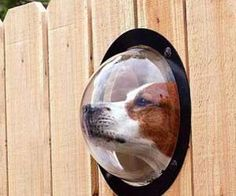 Giving your dog a window to the outside world of your garden - www.MyWonderList.com