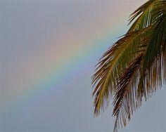 North Shore Coconut RainbowHawaiian Rainbow by PatrickVieiraPhotos