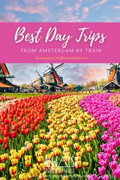The city of Amsterdam has so much to offer and much of it can be seen by train! Whether you're looking for the excitement of a city or the peace of the countryside, our Amsterdam train guide has you covered. #amsterdamtravel #amsterdamtrain #traindaytrip#goudacheesemarket #castletripseurope #amsterdamtours #amsterdamtourist #bestoursinamsterdam #muidennetherlands #muidencastle #belgiumthingstodo #dutchtravel Amsterdam Weekend, Day Trips From Amsterdam, Day Trip From Paris, Amsterdam City, Amsterdam Travel, Road Trip Europe, Europe Travel Guide, Europe Destinations, Spain Travel