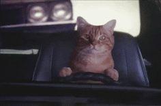 Y este gato se quedó atorado en la caseta de la México-Cuernavaca. | 19 Animales que decidieron no regresar de vacaciones.