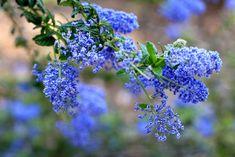 Something Blue  Flower Photo Print 4x6 by MermaidSightings on Etsy, $7.00