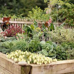 Planning Your First Vegetable Garden