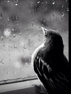 Hüzün, yok olanın eksikliğinden, üzüntü ise varolanın eksikliğinden kaynaklanır...                                   / Ali Şeriati