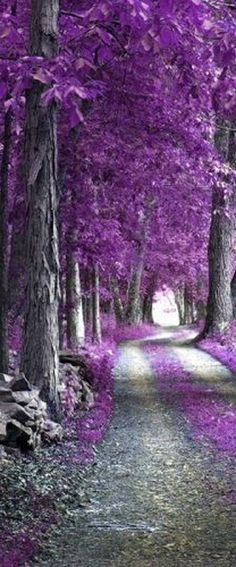 Textures Nature Misc The Purple Forest Wallpaper Purple Love, All Things Purple, Shades Of Purple, Purple Stuff, Purple Rain, Beautiful World, Beautiful Places, Beautiful Scenery, Forest Wallpaper