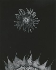 PAUL CAPONIGRO  b. 1932 Sunflower Date:	1969