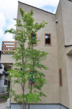 ヒメシャラ Backyard Landscaping, Landscape, Plants, House, Balcony, Gardening, Design, Backyard Landscape Design, Scenery