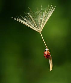 assim elas aprendem a voar !!
