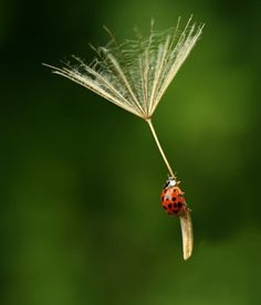Skydiving - Insect style!