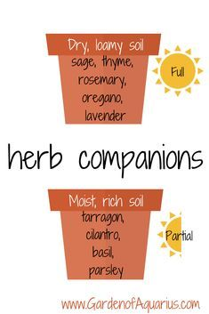 - Garden of Aquarius Growing herbs in pots herb companion guide. DIY growing herbs in pots. Tutorial with companion planting infographic.Growing herbs in pots herb companion guide. DIY growing herbs in pots. Tutorial with companion planting infographic.