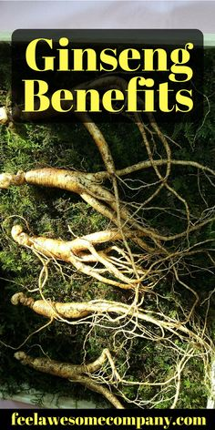 Ginseng is a perennial herb that begins to bloom in its fourth year. It grows in the United States, Canada and the mountainous forests of East Asia. The Translucent yellowish-brown roots are harvested when the plants reach between 3 and 6 years of age. This herb has been used in the Orient for 5000 years as a tonic. #ginseng