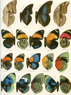 Free Vintage Clip Art - Butterfly Wings Galore