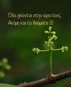Greek Quotes, Self Improvement, Picture Quotes, True Stories, Wise Words, Best Quotes, Affirmations, Pray, Believe