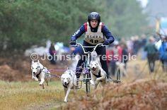 Husky Racing in Elveden Forest