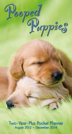 Buy Pooped Puppies 2013 2014 Pocket Planner online at Megacalendars Two Year Plus Pocket Planner with a napping puppy right on the cover Features 64 pages with color coded months years Handy portable size of 3 5 x 6 5
