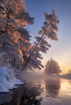 *** winter wonderland