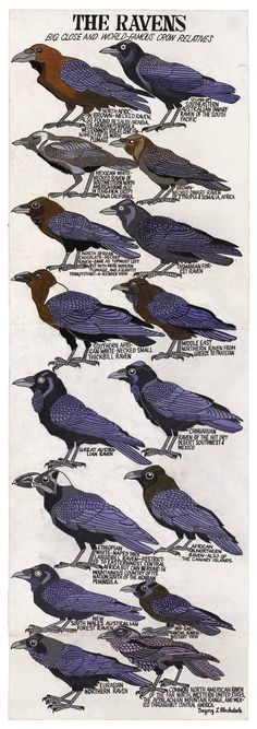 "Crows Ravens: ""The #Ravens,"" by Seattle based artist Gregory Blackstock (his life story is fascinating and worth looking up!)."