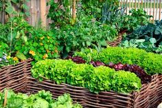 Companion Gardening It's part folklore, part science, but companion planting just may help your garden grow. - Companion planting just may help your garden grow. Diy Herb Garden, Tomato Garden, Garden Soil, Easy Garden, Summer Garden, Vegetable Garden Planner, Raised Vegetable Gardens, Raised Garden Beds, Vegetable Gardening