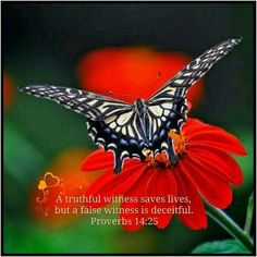 Proverbs 14:25 NIV A truthful witness saves lives,  but a false witness is deceitful.