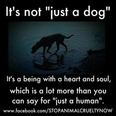 Not just a dog -