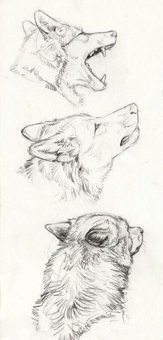 Need some drawing inspiration? Well you've come to the right place! Here's a list of 40 free and easy animal sketch drawing ideas and inspiration. Why not check out this Art Drawing Set Artist Sketch Kit, perfect for practising your art skills. Drawing Sketches, Cool Drawings, Drawing Ideas, Sketch Ideas, Drawings Of Wolves, Drawing Tips, Anime Drawing Tutorials, Tumblr Art Drawings, Dog Drawing Tutorial