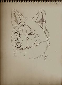 Picture of Guides to Drawing Wolves