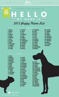 Most Popular Puppy Names 2013 Dogs dog names Top Dog Names, Dogs Names List, Female Dog Names List, Best Male Dog Names, Names For Boy Dogs, Girl Dog Names Unique, Female Animal Names, Names For Puppies, Pet Care