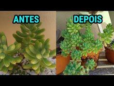 Exterior Wall Design, Paper Cactus, Eco Garden, Low Maintenance Plants, Ponds Backyard, Cacti And Succulents, Garden Design, Flora, Herbs