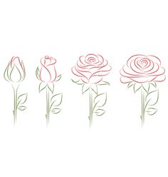 Blooming roses vector on VectorStock&reg