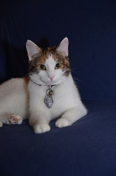 Posh Pose Kitty