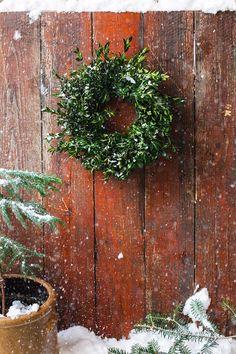 loving this petite #boxwood wreath