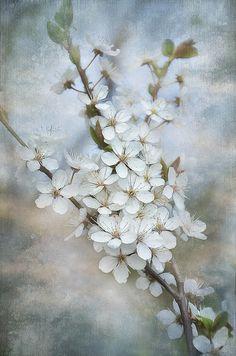 Flowering tree...