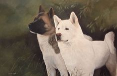 Akita Art Prints Mick Cawston Lyn Paterson Steven Nesbitt